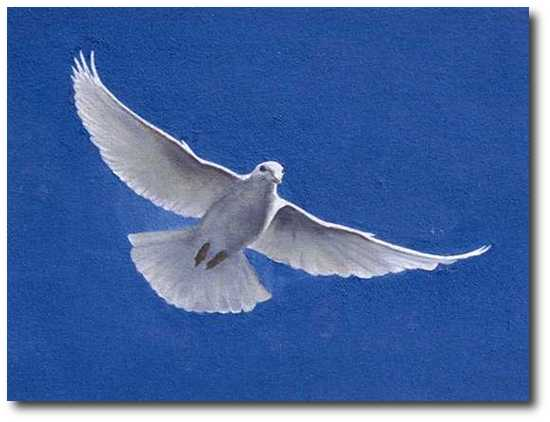 Image: A flying dove