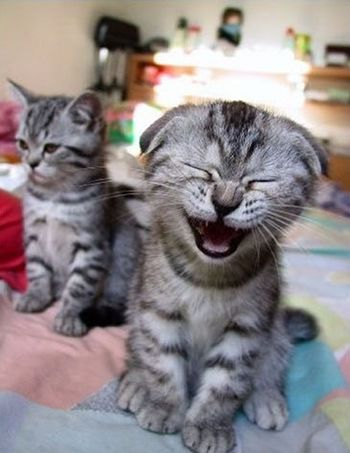 Image: A laughing kitten