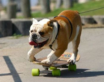 Image: A skateboarding dog