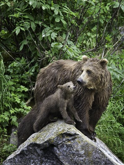 A bear and her cub